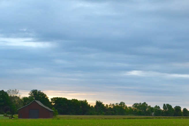 First morning light in the field where our garden plot is.